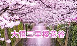 大悟三里樱花谷