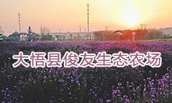 大悟县俊友生态农场