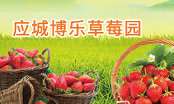 应城博乐草莓园