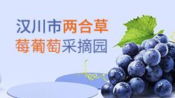 汉川市两合草莓葡萄采摘园