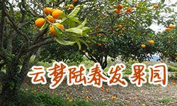 云梦陆春发果园