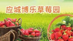 应城董家草莓园