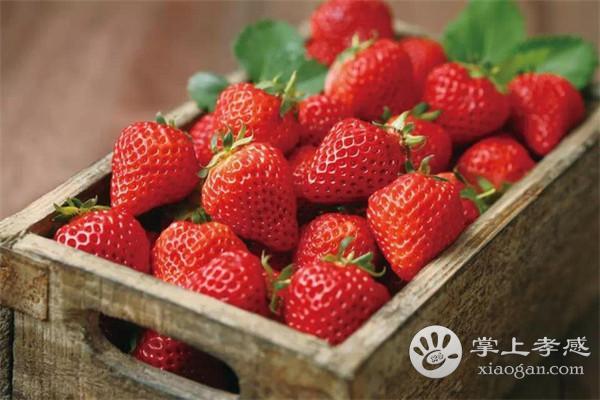 孝感永高农业生态园可以采摘哪些水果?孝感永高农业生态园水果最佳采摘期介绍[图2]
