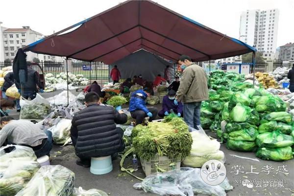 云梦城区每天给居民配送蔬菜10多个品种24万斤[图3]