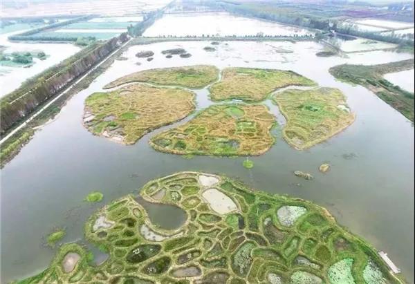"""孝南区朱湖国家湿地公园:湿地保护的""""朱湖智慧"""""""
